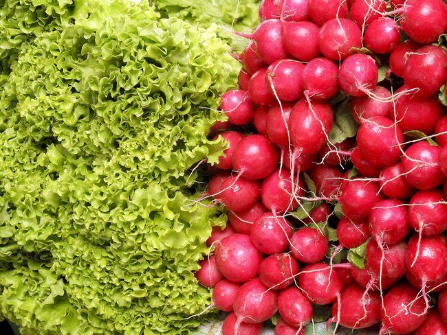 ранние овощи на небольшом участке
