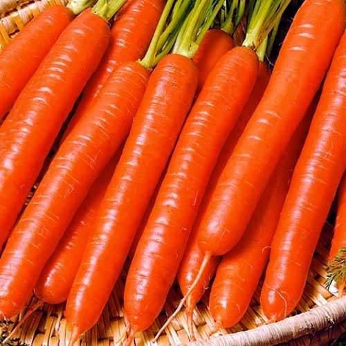 Морковь Витаминная - 6