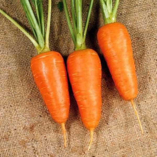 Морковь Шантане 2461