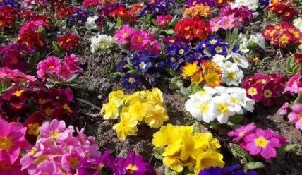 14 цветов, которые можно посадить под зиму