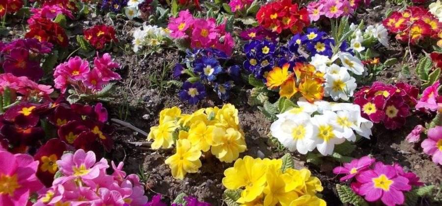 Какие цветы посадить осенью под зиму?