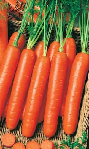 Морковь Нантская - 4