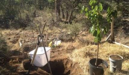 Как правильно делать посадочную яму