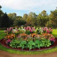 Как самим сделать красивый миксбордер – Размеры и цветы для миксбордера