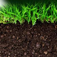 Как улучшить плодородие почвы на дачном участке