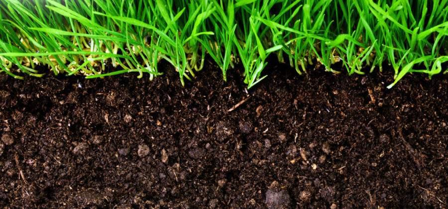 Как повысить плодородие почвы и увеличить урожай