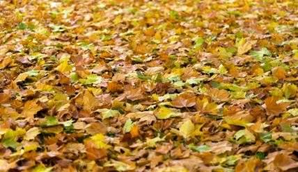 Что делать с опавшей листвой на даче?