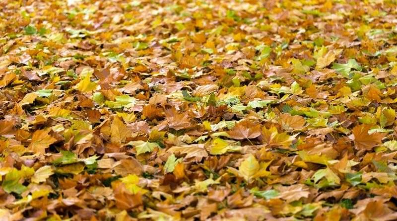 Опавшие листья как удобрение