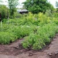 Самые частые ошибки садоводов. Часть 1