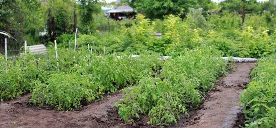 Как мы можем навредить садовым растениям при неправильном уходе за ними