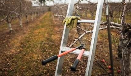 Обрезка плодовых деревьев. Сроки обрезки