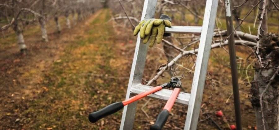 Как правильно и когда обрезать плодовые деревья