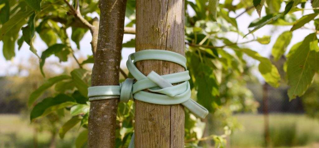 Подвязка дерева