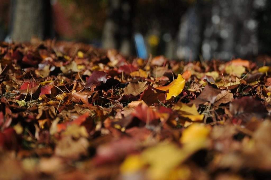 Мульчирующий слой из листьев