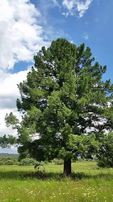 Взрослое дерево кадра