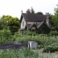 Совместимость плодовых растений в саду