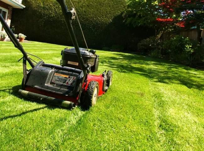 Что сделать для газона до зимы