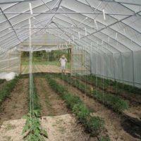 Проверяем себя, правильно ли подготовили теплицу к новому огородному сезону