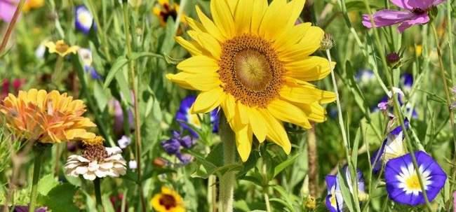 Сажаем рассаду цветов в апреле