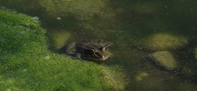 Тина в дачном пруду. Основные причины