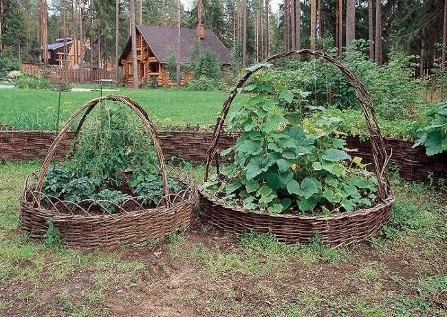 Овощная плетеная грядка