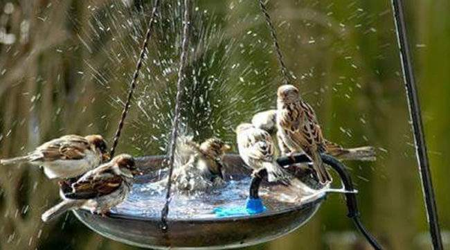 Купальня для птиц в саду