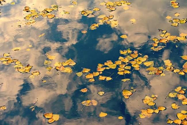 Листья в пруду