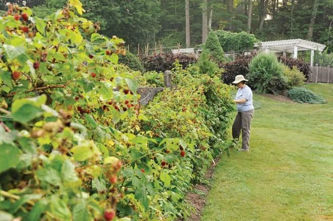 Ягодные кустарники в стиле сада