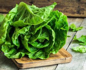 Как вырастить кочанный салат