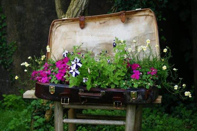 Интересные идеи для сада. Цветник в старом чемодане