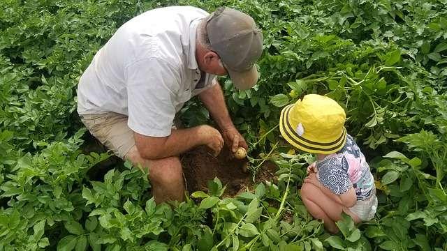 Осмотр картофеля во время вегитационного периода
