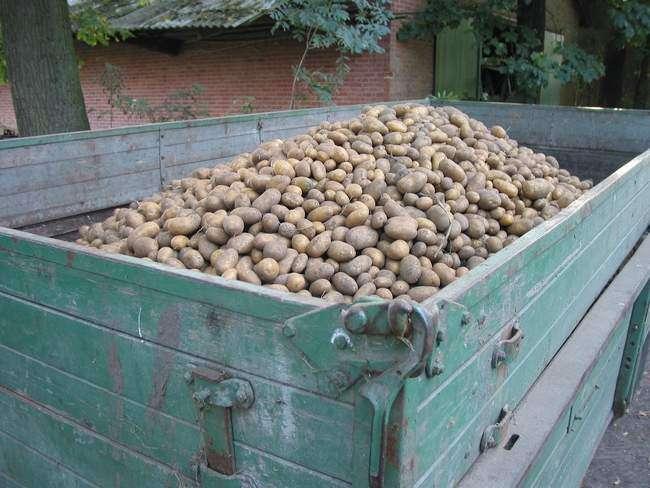 Перевозка картофеля