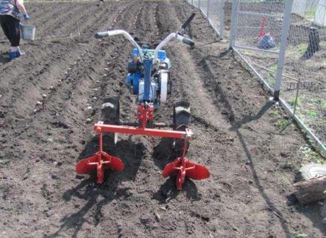 Садим картофель мотоблоком