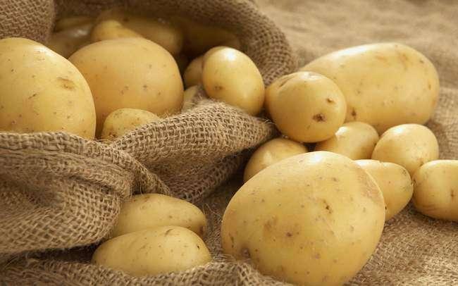 Выбираем метод выращивания картошки