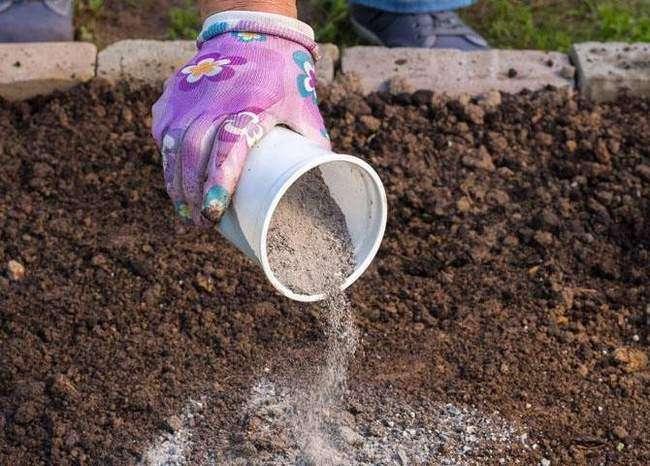Внесение золы в почву в качестве удобрения