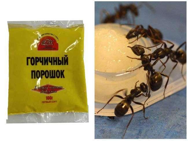 Горчица от муравьев на участке