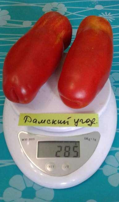 Помидоры Дамский угодник на весах