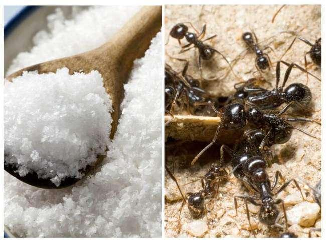 Соль против муравьев