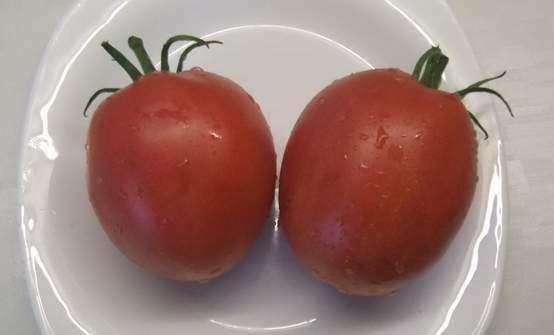 Cорт Солдатово Минусинские томаты