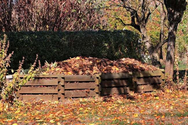 Компостная куча из опавших листьев