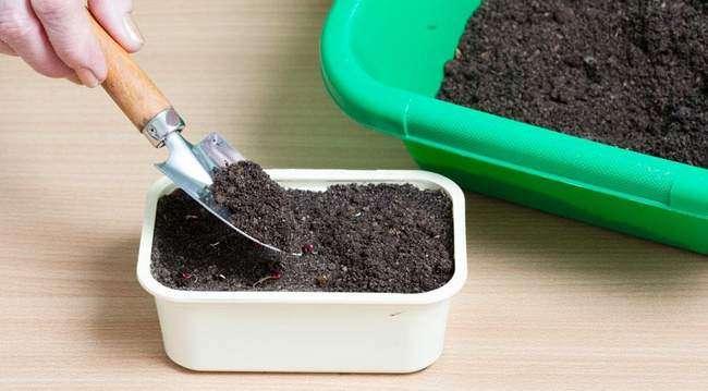 Подготовка почвы к высадке семян бархатцев