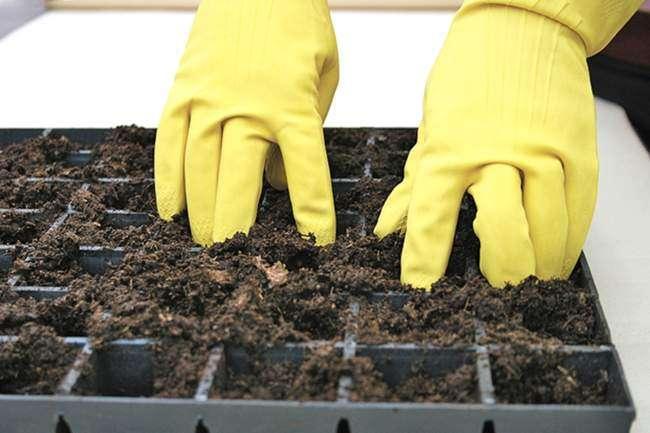 Подготовка почвы для рассады астр