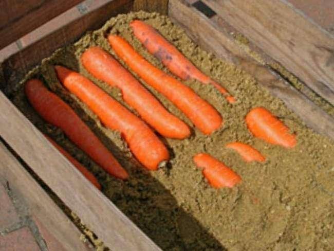 Хранение моркови в ящиках с песком