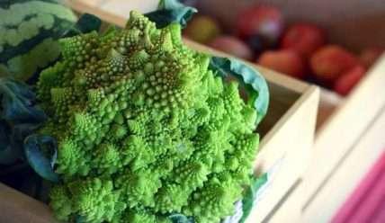 26 лучших сортов цветной капусты от ранней до самой поздней