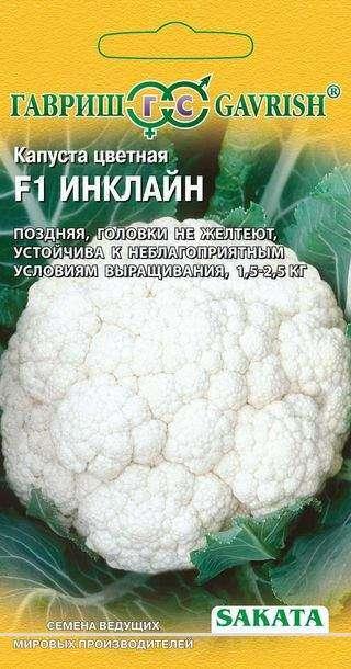 Инклайн – разновидность сорта цветной капусты
