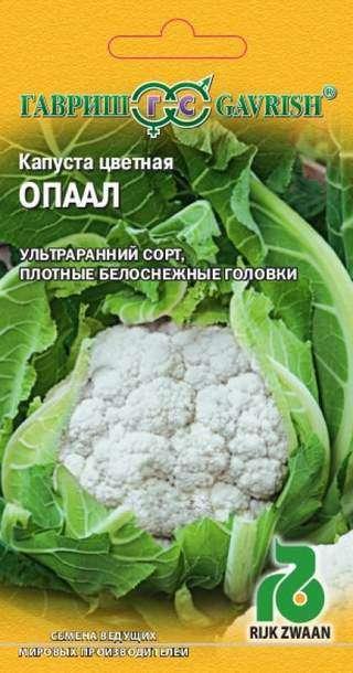 Сорт капусты Опал