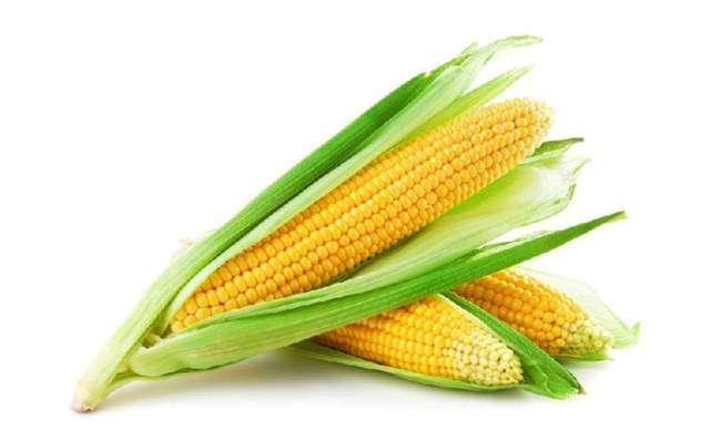 Сорт сладкой кукурузы Вега f1