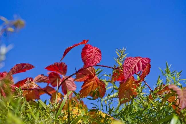 Плюсы и минусы посадки осенью
