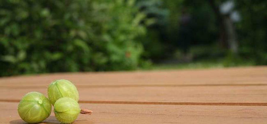 Почему не плодоносит крыжовник, причины отсутствия урожая