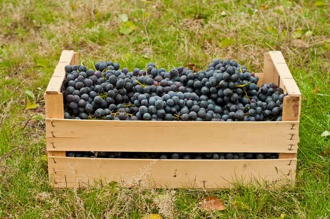 Транспортировка винограда
